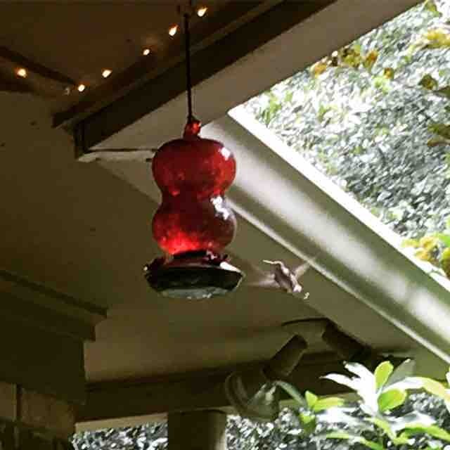 Love to watch the hummingbirds on the patio but Imhellip