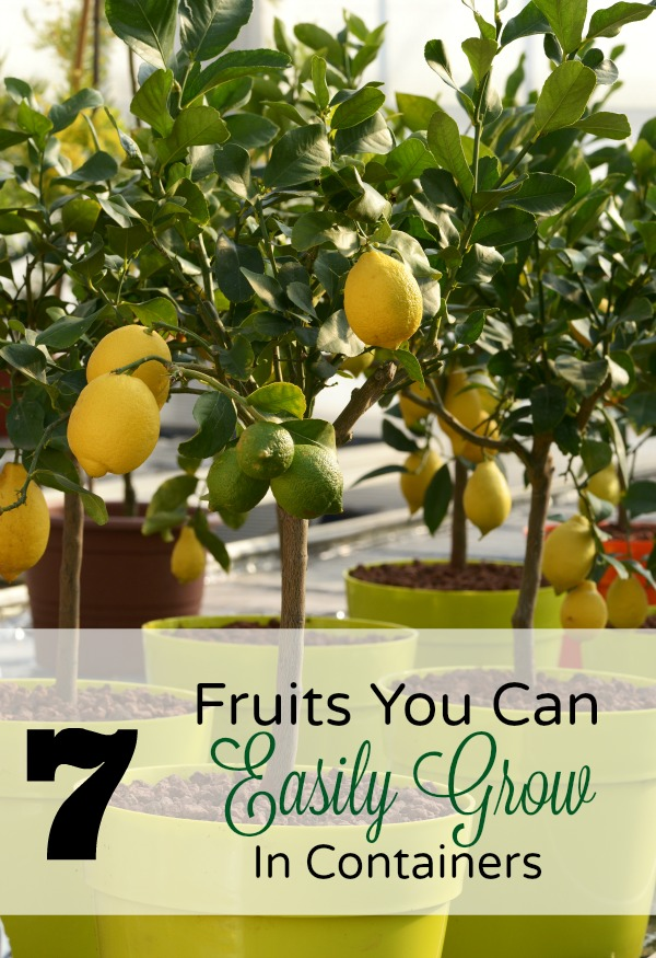 7 Fruits You Can Grow in Containers