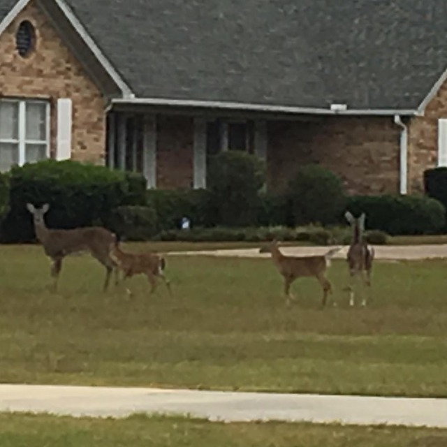 Pull out of the driveway and there was a familyhellip