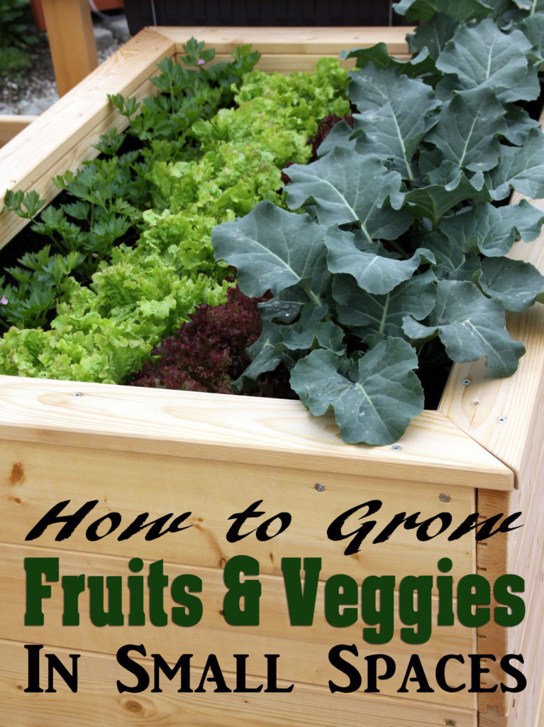 How to Grow Fruits & Veggies in Small Spaces