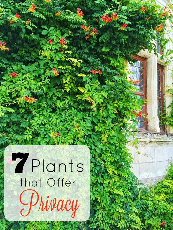7 Plants that Offer Privacy