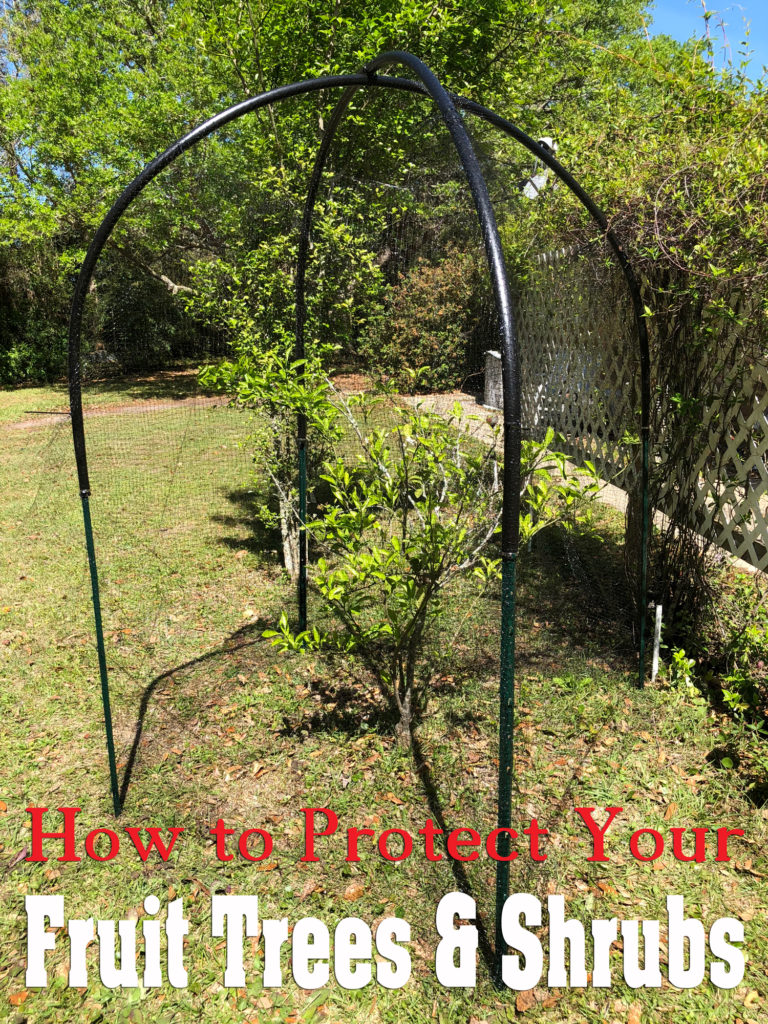 How to Protect Fruit Trees and Shrubs from Birds, Squirrels & Other Pests