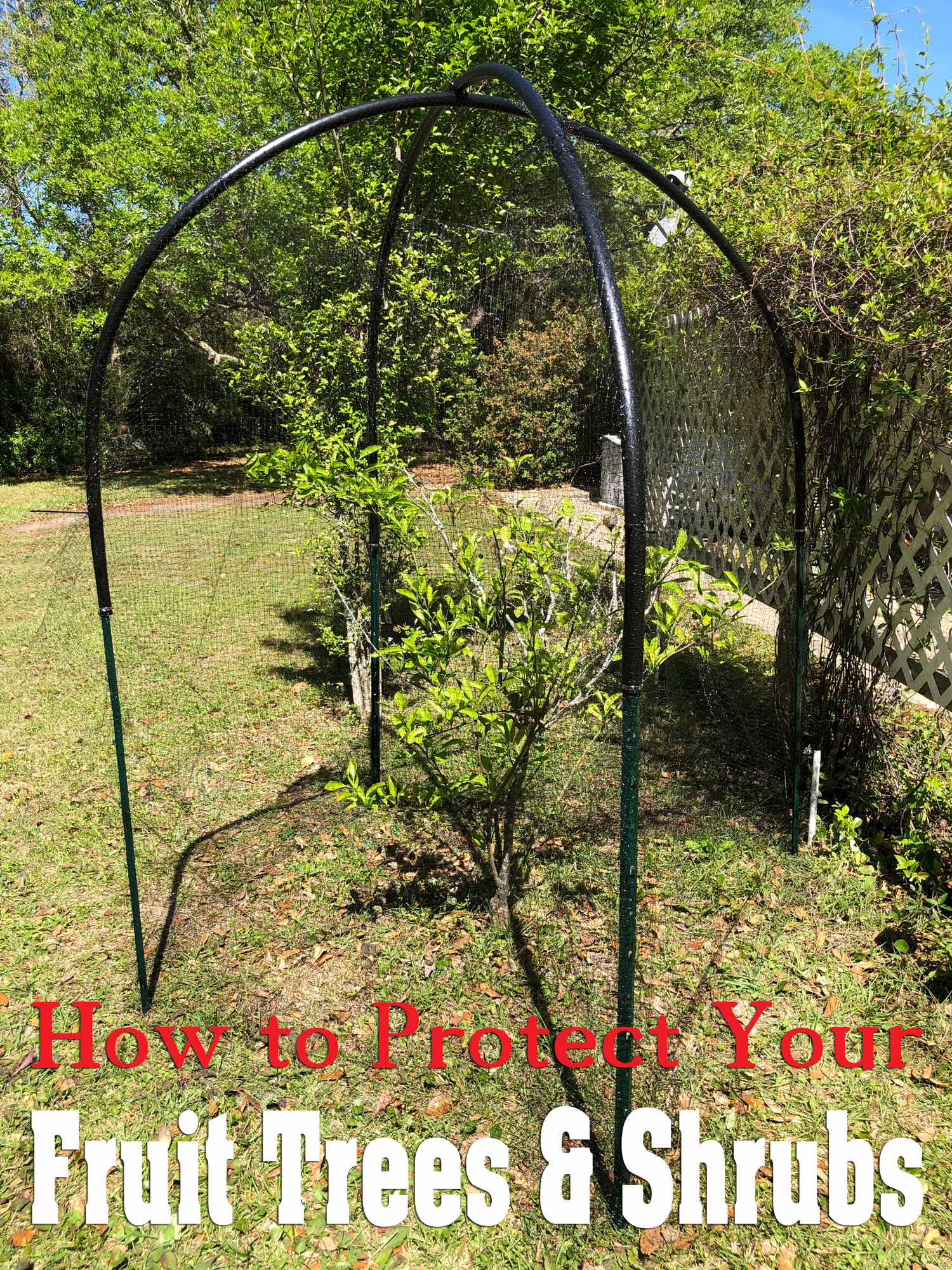 How To Protect Fruit Trees And Shrubs From Birds Squirrels Other Pests